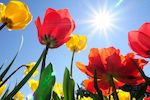Милые дамы!  Примите поздравления с праздником весны!